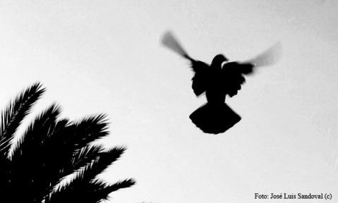 Foto vuelo sutil (Foto: José Luis Sandoval)