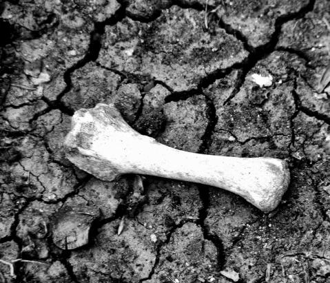 Fotos de vida y muerte (Foto: José Luis Sandoval)